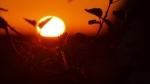 sun-1391459